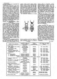 arquitecto termitas-1956-abc-2b